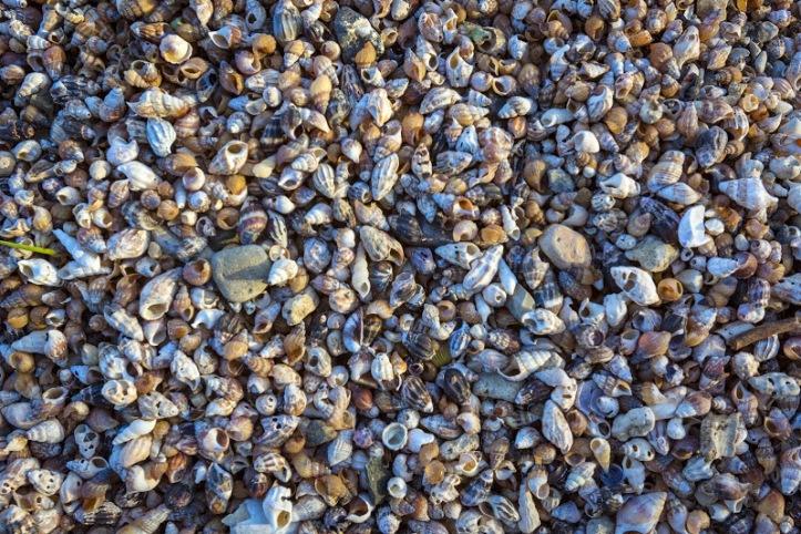 sea of galilee shoreline