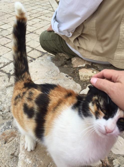 Lots of kitties running around Jerusalem